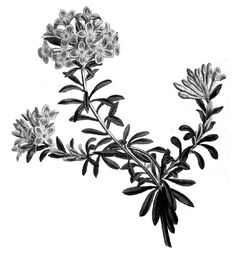 Tiny Taxonomy Exhibition Elements 2