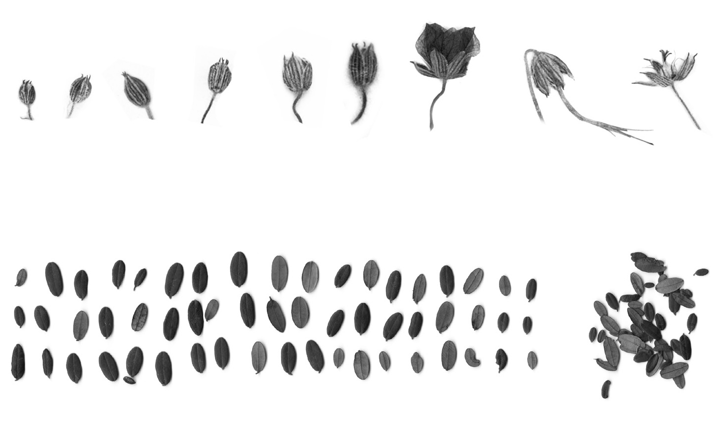 Tiny Taxonomy Exhibition Elements 3