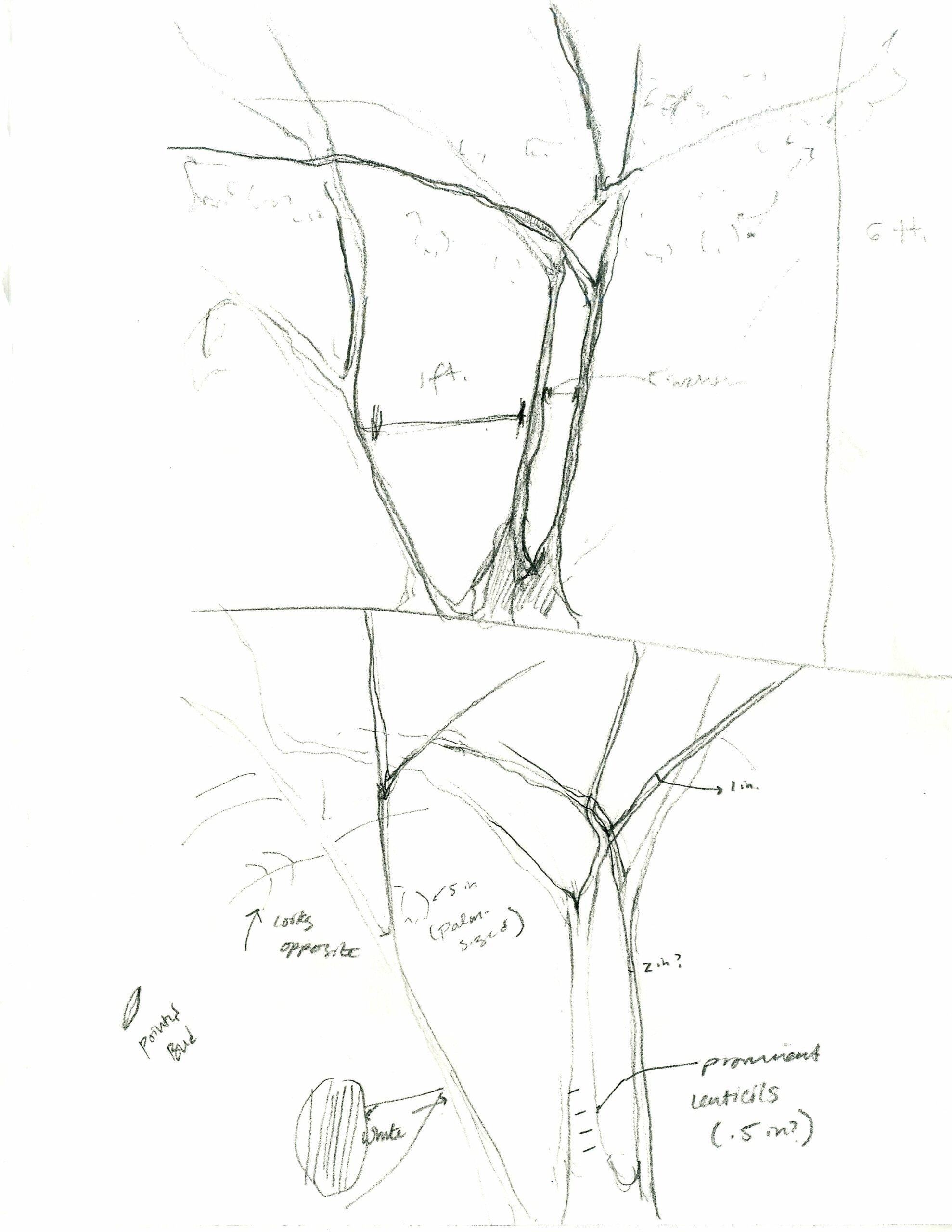 lynchann_136513_3037320_Lynch_Ann_Assignment 1_In Situ Diagram