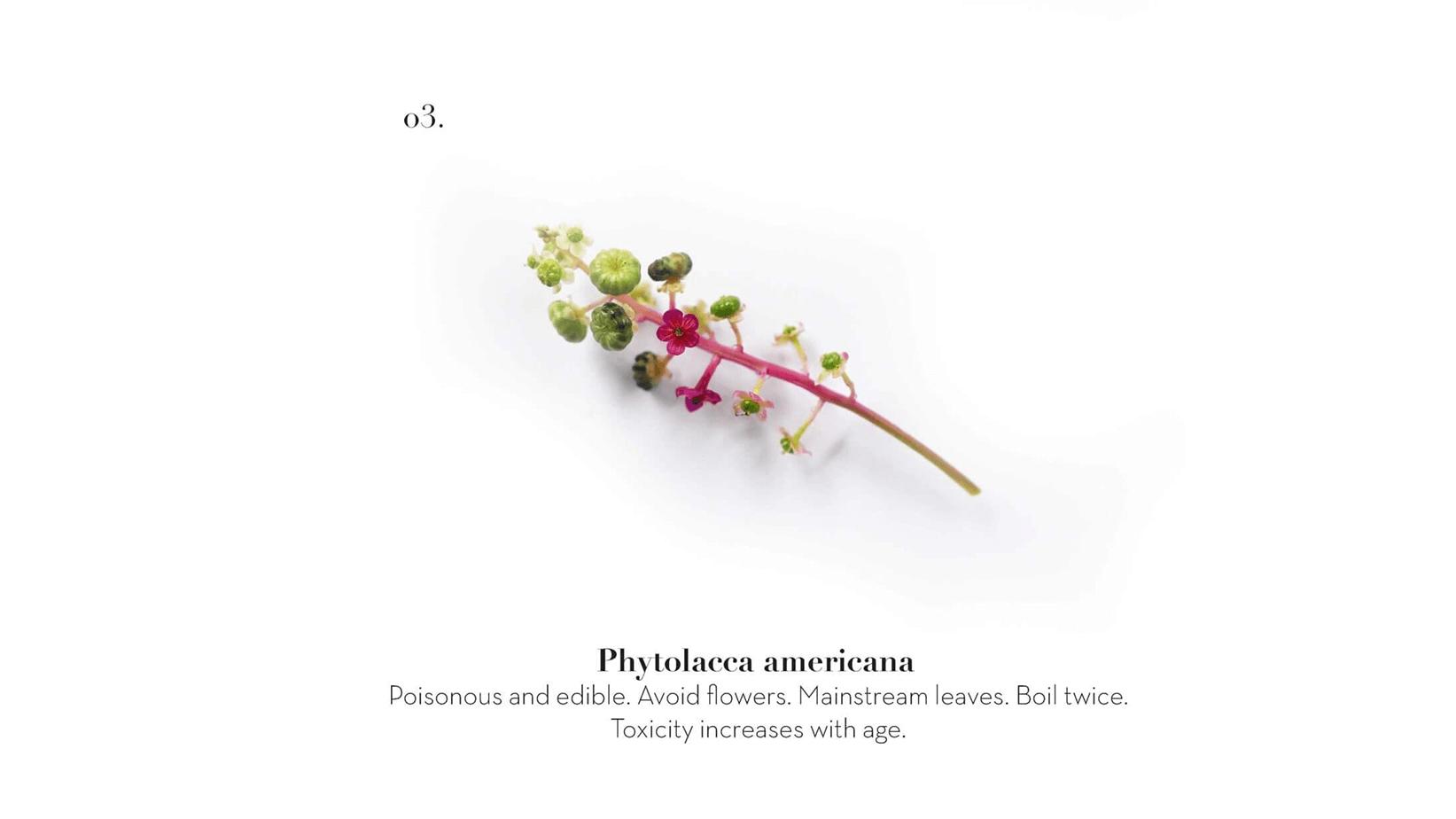 PLANT_MENU_MAIN_01
