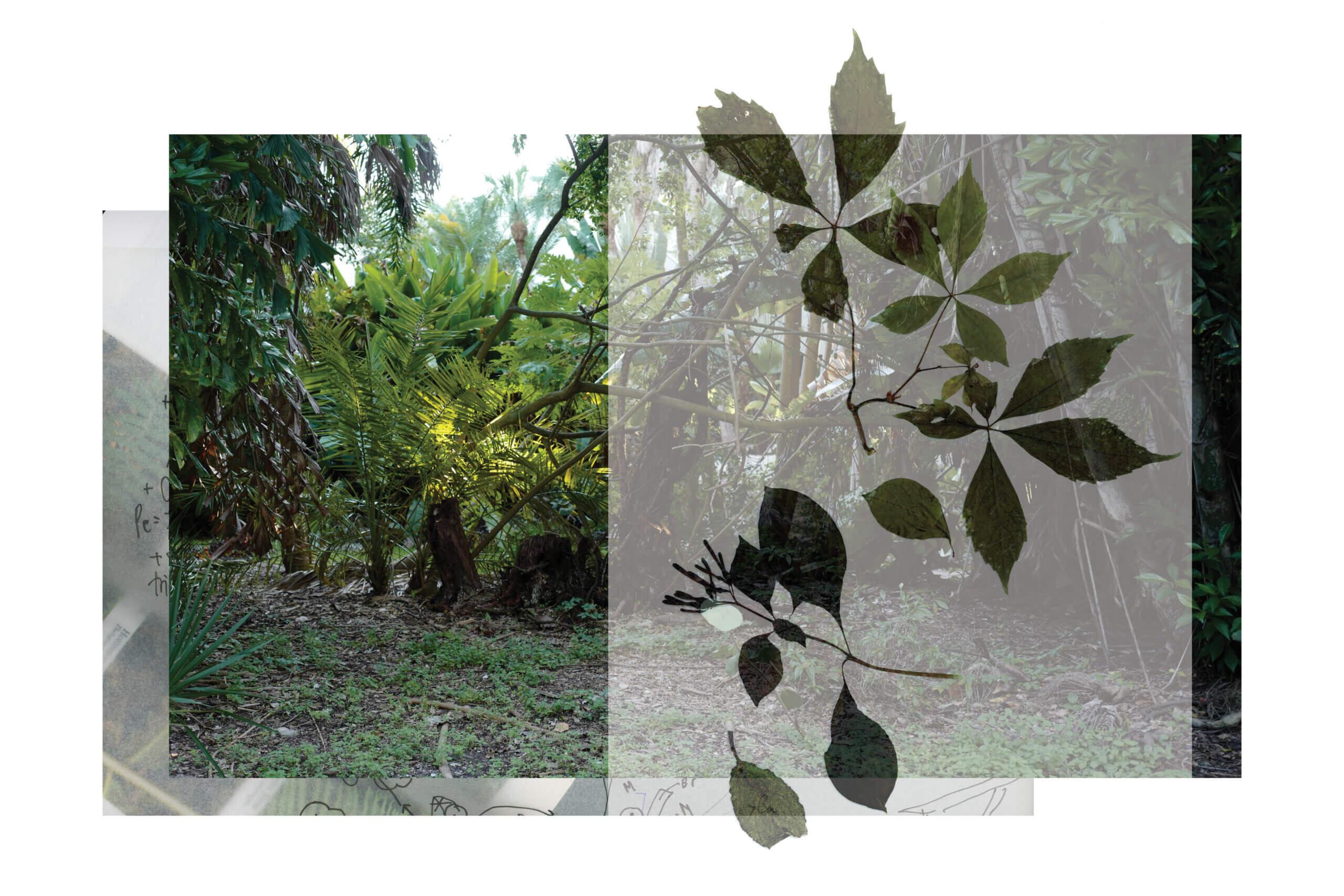 PI_Collage